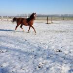 Winter Koppel